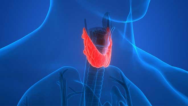 Hypothyroidism Caused By Estrogen Dominance